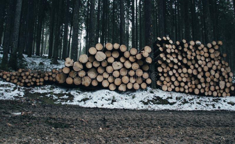 Un mazzo di ceppi di legno tagliati accatastati in una foresta fotografia stock libera da diritti