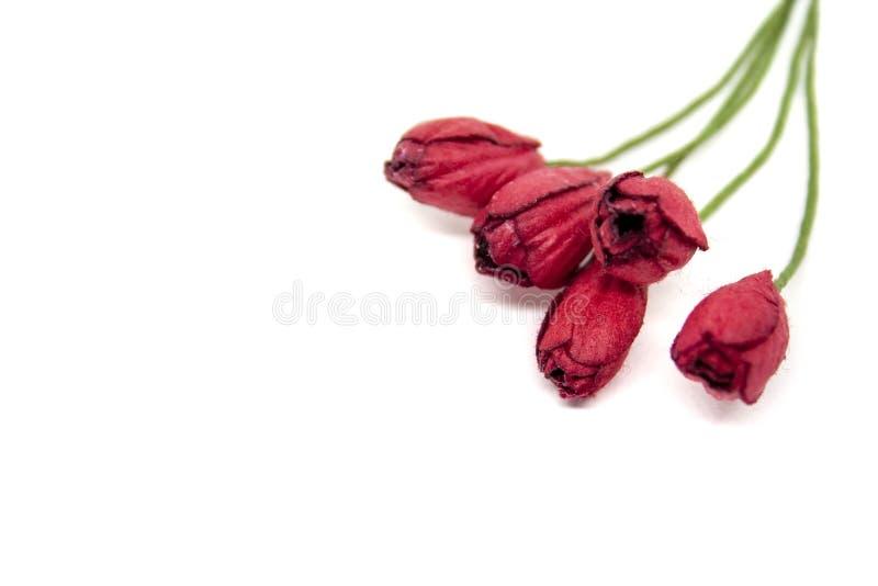 Un mazzo di cinque piccoli tulipani di carta rossi isolati su fondo bianco fotografia stock libera da diritti
