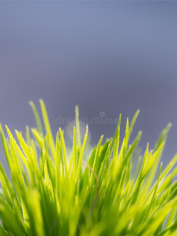Un mazzo di erba immagine stock