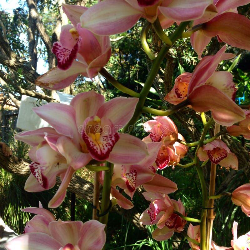 Un mazzo di orchidee immagine stock immagine di petali for Costruire un mazzo di portico