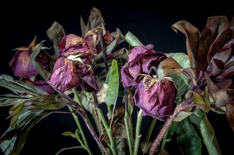 Un mazzo di rose morte immagini stock libere da diritti