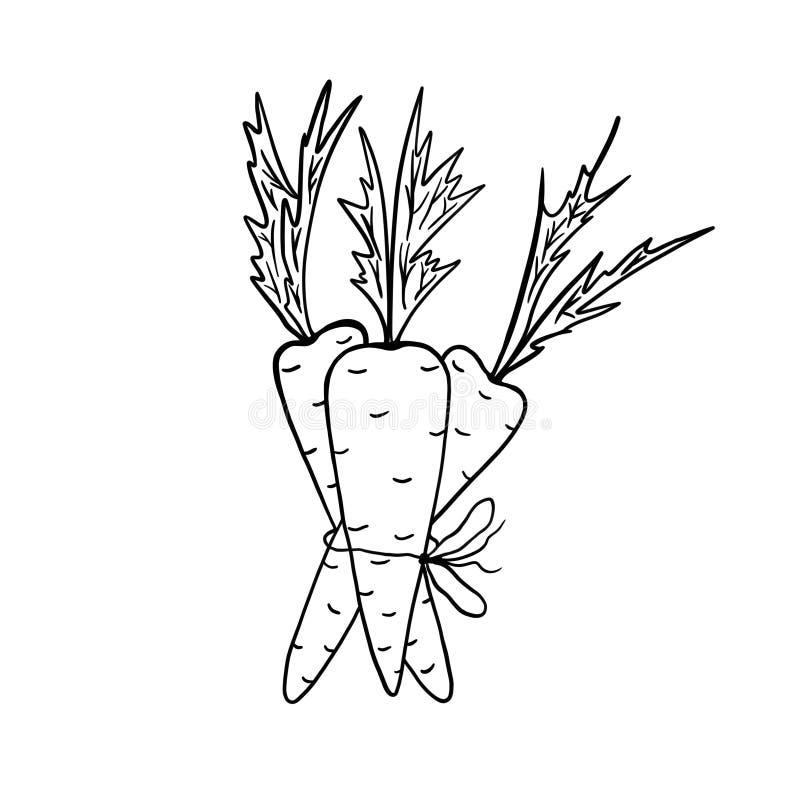 Un mazzo di tre carote Illustrazione in bianco e nero su una priorit? bassa bianca royalty illustrazione gratis