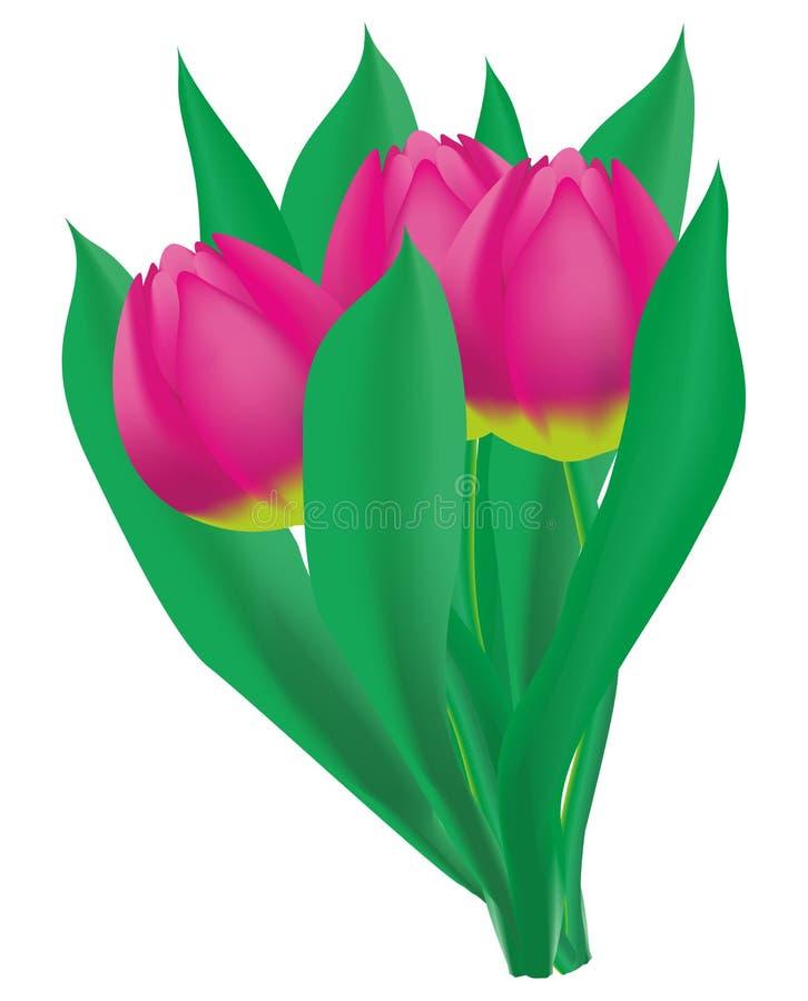 Un mazzo di tre tulipani rosa con le foglie fotografia stock