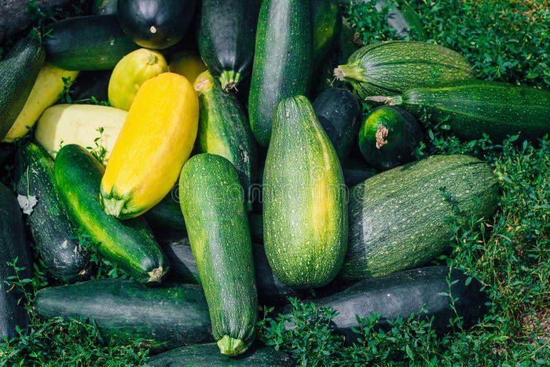 Un mazzo di zucchini si trova sull'erba fotografia stock libera da diritti