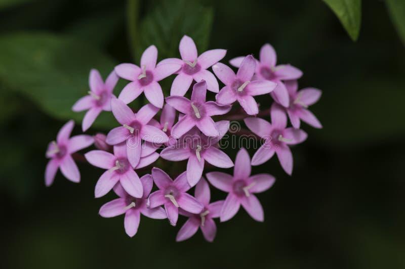 Un mazzo natual dei fiori fotografie stock