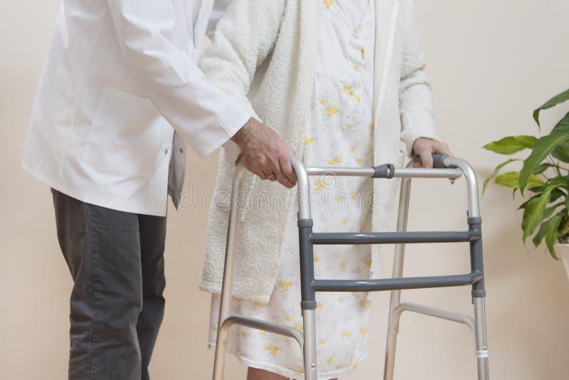 Un medico geriatrico insegna a per camminare una donna anziana facendo uso di un camminatore di riabilitazione fotografia stock libera da diritti