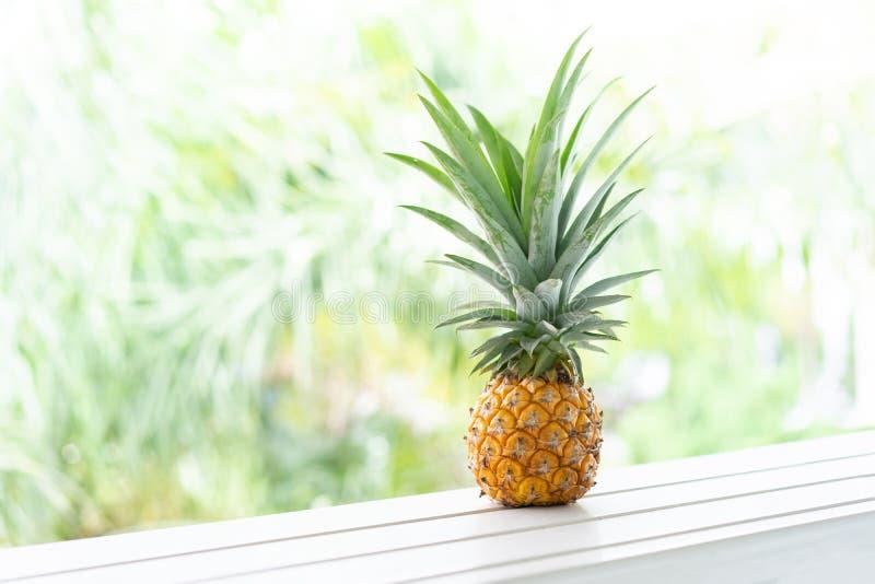 Un mini ananas con il fondo della sfuocatura in Tailandia fotografie stock