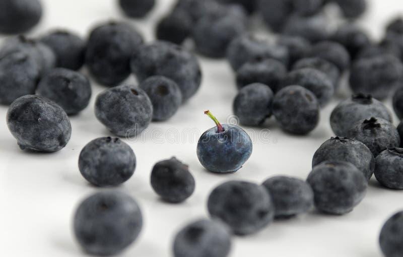 Download Un mirtillo fra molti immagine stock. Immagine di frutta - 218979