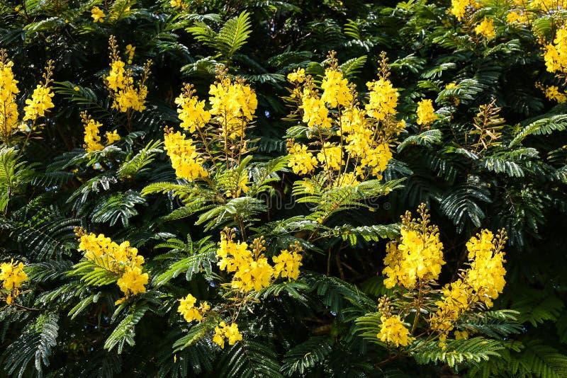 Un modèle floral des fleurs jaunes entourées par les feuilles vertes photographie stock libre de droits