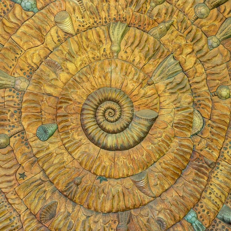 Un modello stupefacente di Fibonacci nelle coperture di nautilus immagini stock libere da diritti