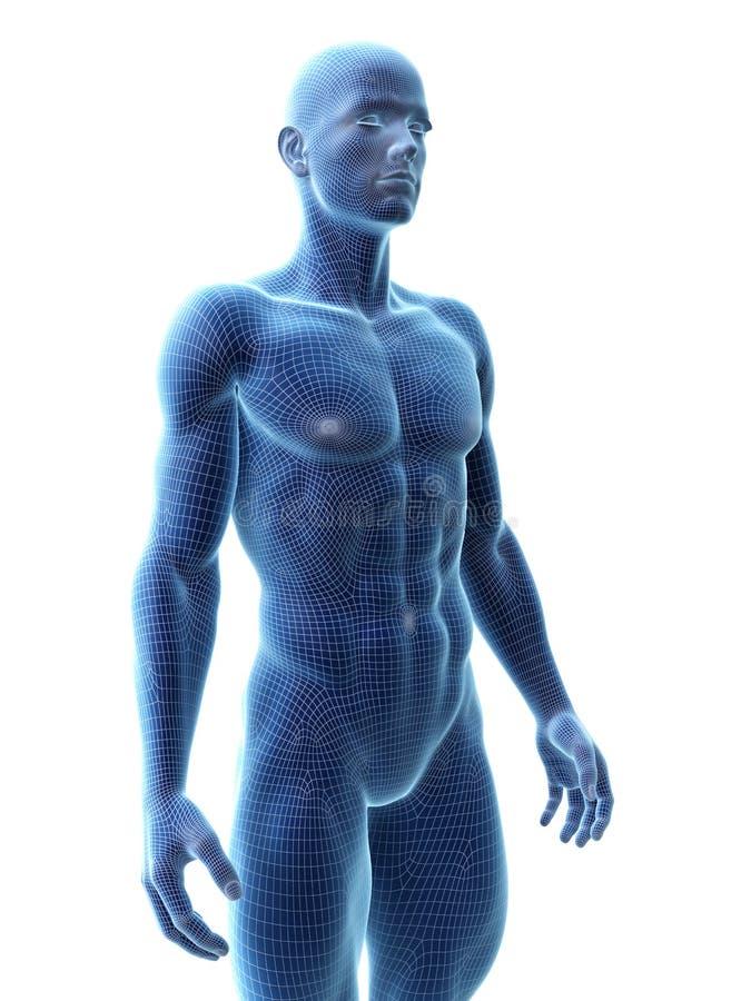 Un modelo masculino rasgado ilustración del vector