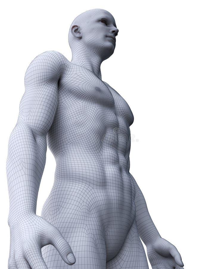 Un modelo masculino rasgado libre illustration