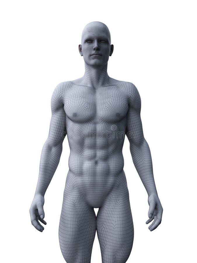 Un modelo masculino rasgado stock de ilustración