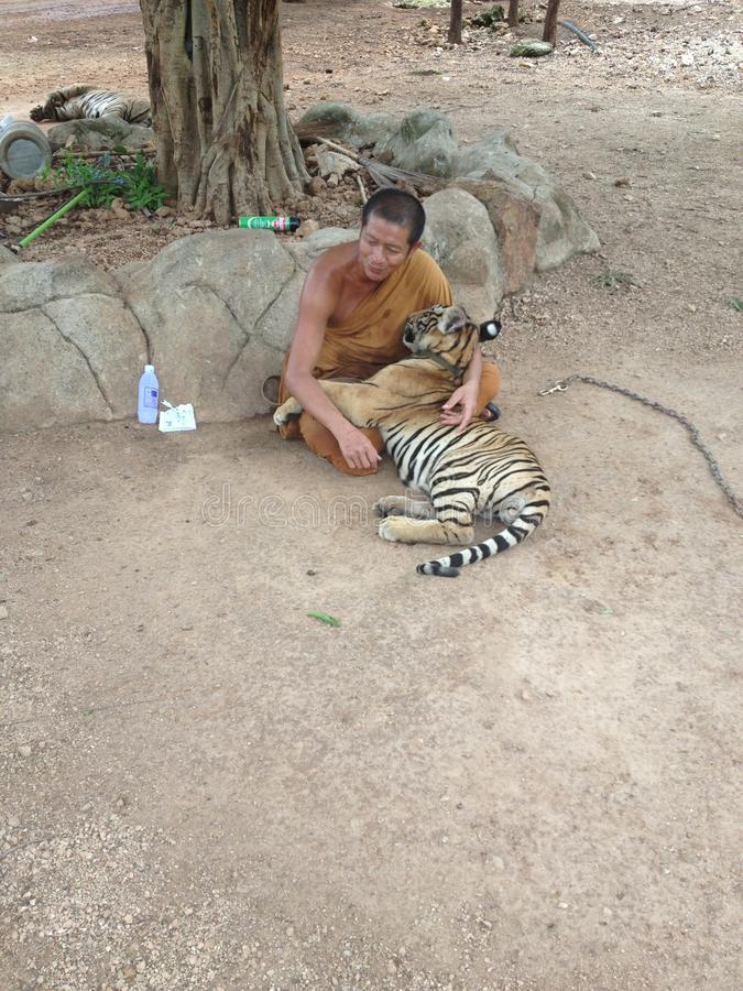 Un moine soignant un petit animal de tigre photo libre de droits