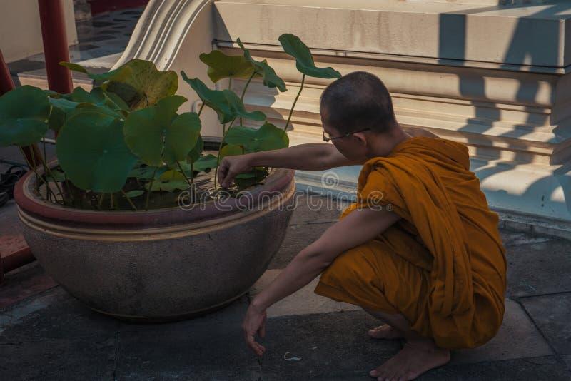 Un moine tendant, à ses fonctions quotidiennes photographie stock libre de droits