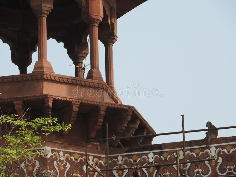 Un mono que se sienta en una pared fuera de Taj Mahal en Agra, la India fotografía de archivo libre de regalías