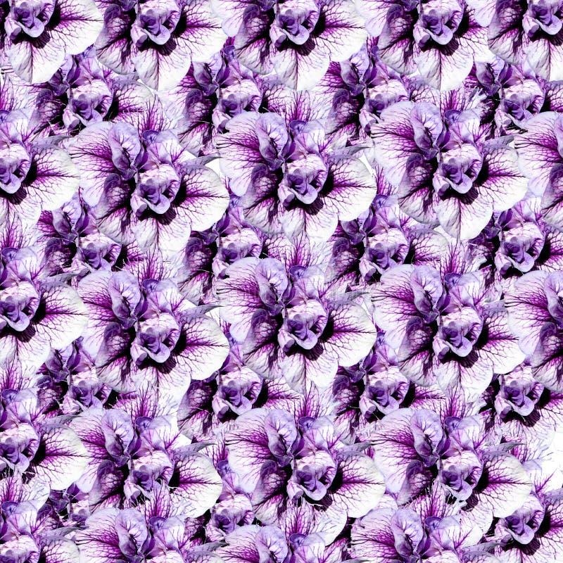 Un montage des fleurs illustration libre de droits