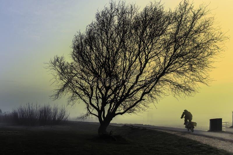 Un montar a caballo del ciclista al lado de un árbol grande imagen de archivo