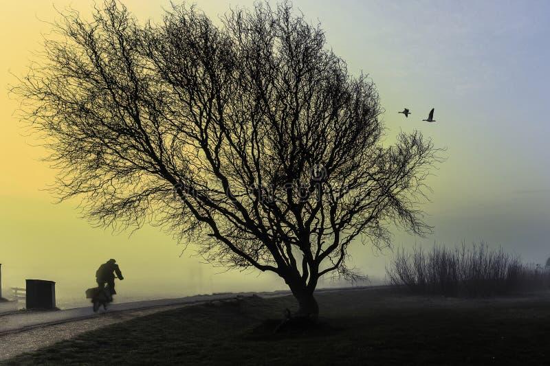 Un montar a caballo del ciclista al lado de un árbol grande foto de archivo