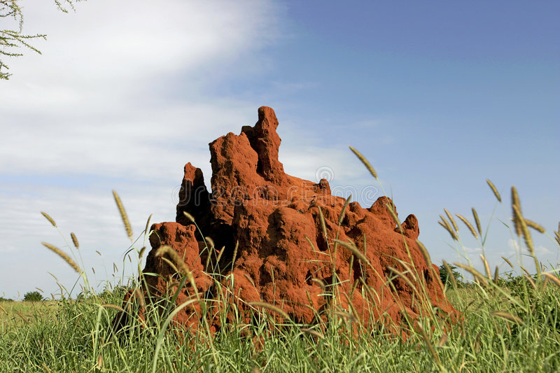 Un monticello delle 46 termiti fotografia stock libera da diritti