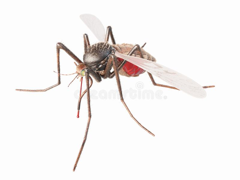 Un mosquito stock de ilustración