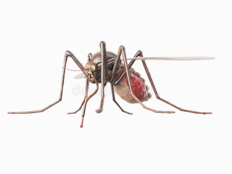 Un mosquito libre illustration