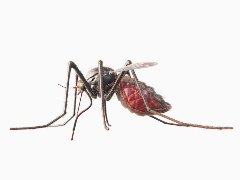 Un mosquito ilustración del vector