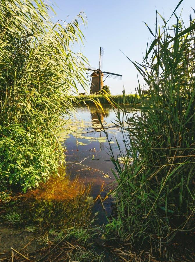 Un moulin à vent sur la banque d'un canal avec des roseaux dans Kinderdijk Hollande, Pays-Bas photographie stock libre de droits