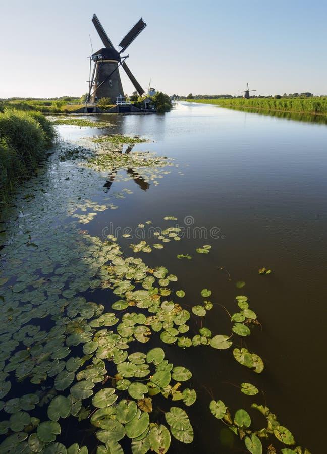Un moulin à vent sur la banque d'un canal avec des roseaux dans Kinderdijk Hollande, Pays-Bas images libres de droits