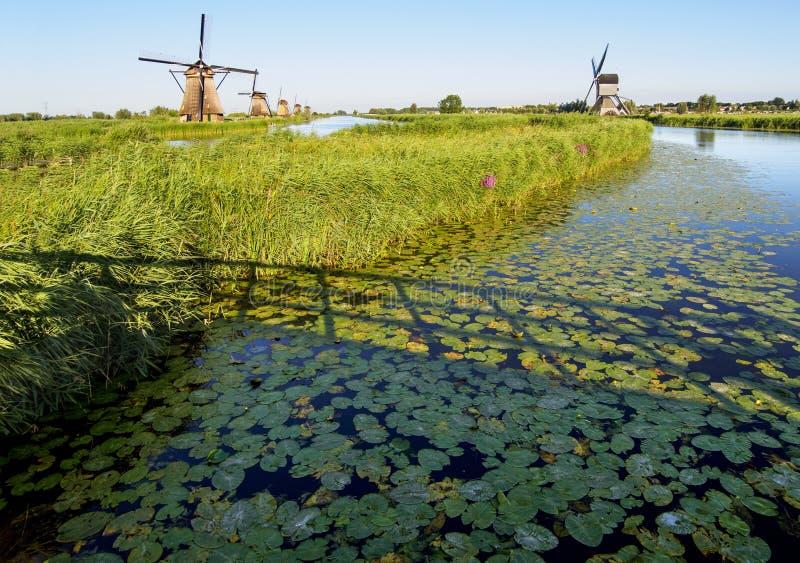 Un moulin à vent sur la banque d'un canal avec des roseaux dans Kinderdijk Hollande, Pays-Bas photo stock