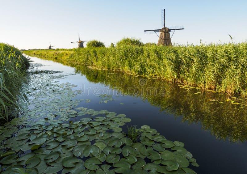 Un moulin à vent sur la banque d'un canal avec des roseaux dans Kinderdijk Hollande, Pays-Bas images stock