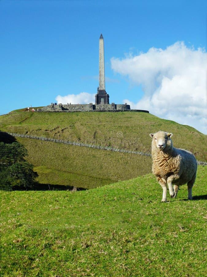 Un mouton en un parc de colline d'arbre, Auckland, Nouvelle-Zélande photographie stock