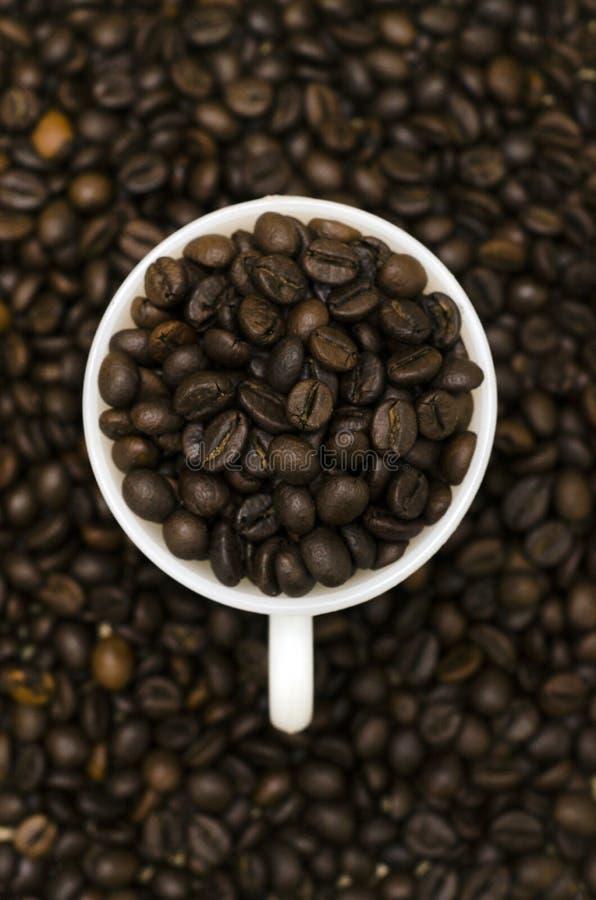 Un mucchio dei chicchi di caffè in tazza bianca con i chicchi di caffè nei precedenti fotografia stock libera da diritti