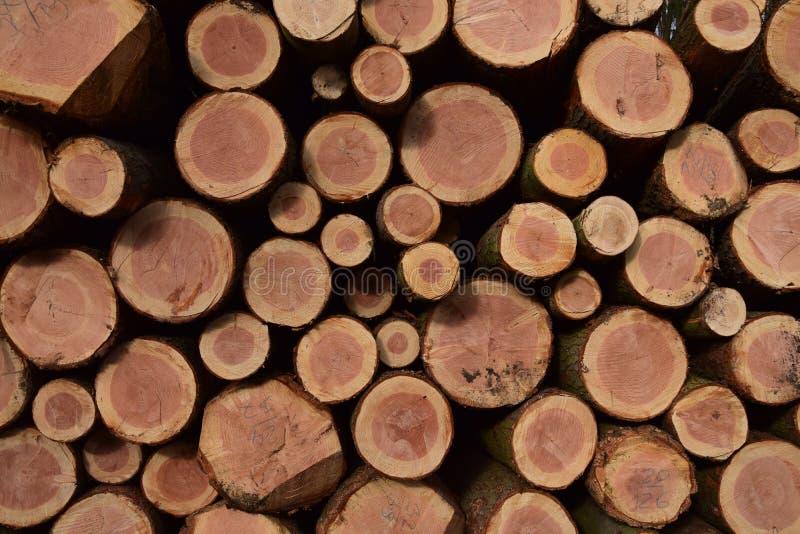 Un mucchio dei tronchi di albero tagliati immagini stock