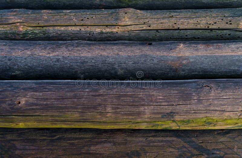 Un mucchio dei tronchi di albero tagliati che si trovano accanto ad a vicenda, fondo di legno immagine stock libera da diritti