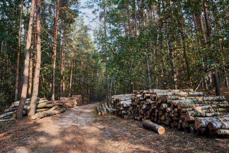 Un mucchio dei tronchi di albero tagliati in una foresta fotografie stock