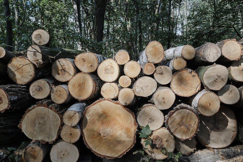 Un mucchio dei tronchi di albero tagliati in una foresta fotografie stock libere da diritti