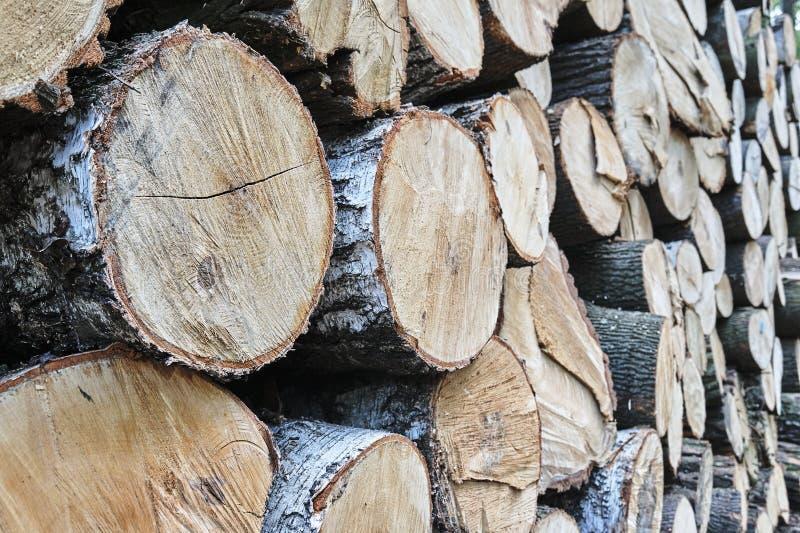Un mucchio dei tronchi di albero tagliati in una foresta immagini stock libere da diritti