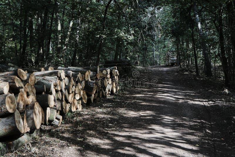 Un mucchio dei tronchi di albero tagliati in una foresta fotografia stock libera da diritti
