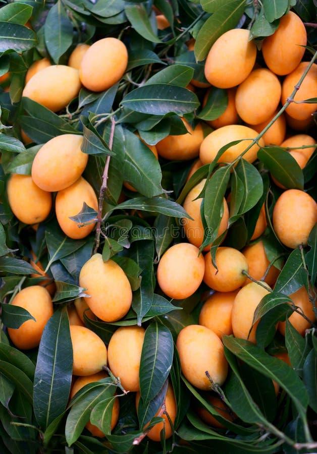 Un mucchio della prugna mariana arancio e della copertura verde scuro della foglia, nell'altro nome è mango o gandaria della prug immagine stock libera da diritti