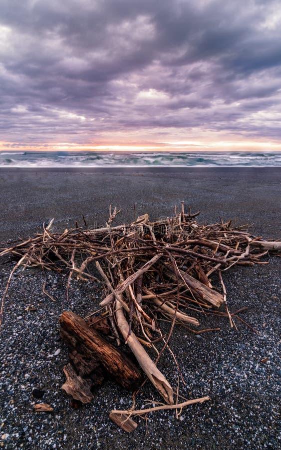 Un mucchio di legname galleggiante ad una spiaggia, Trinidad, California fotografia stock
