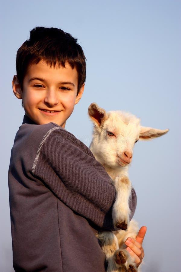Un muchacho con la cabra del bebé fotografía de archivo