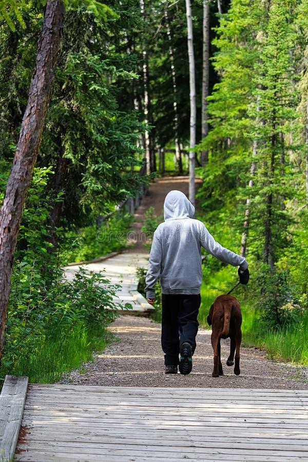 Un muchacho joven que camina su perro en el bosque fotografía de archivo libre de regalías
