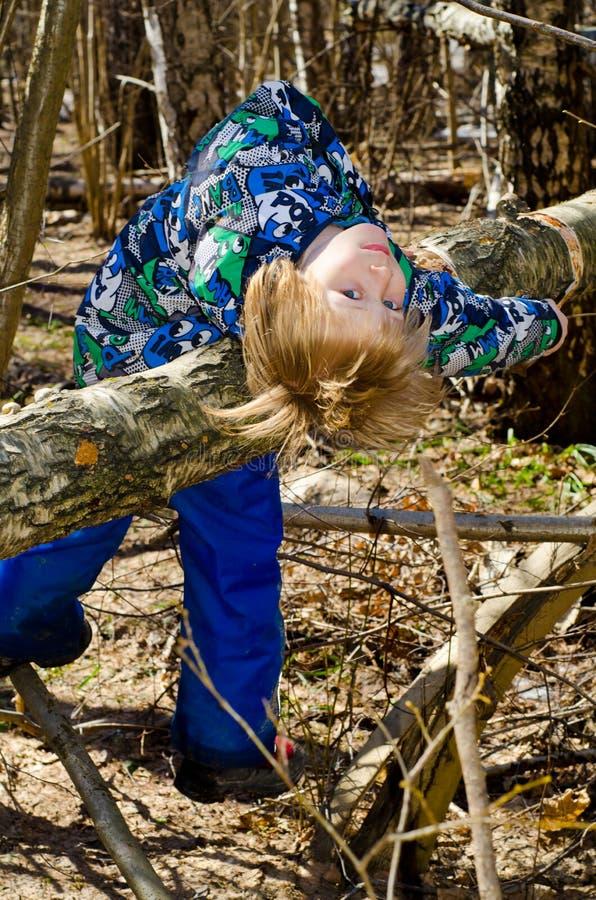 Un muchacho sube en un árbol imagenes de archivo