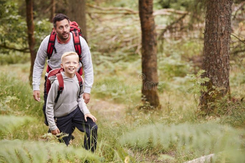 Un muchacho y su padre que admiran la visión mientras que camina en un bosque, frente, visión elevada fotografía de archivo libre de regalías