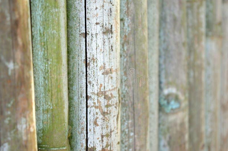 Un mur des bambous dans le zoo photo stock