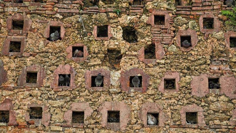 Un mur, la maison des pigeons photographie stock libre de droits