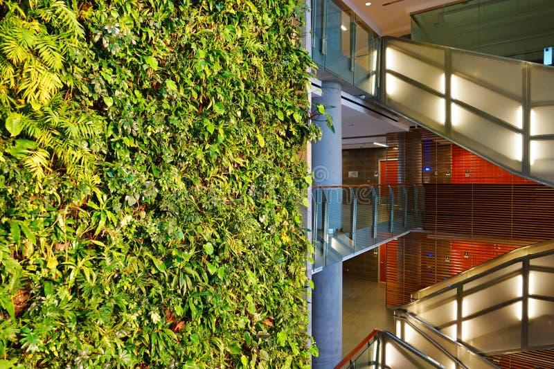 Un mur vivant de plante verte à Ottawa, Canada images libres de droits