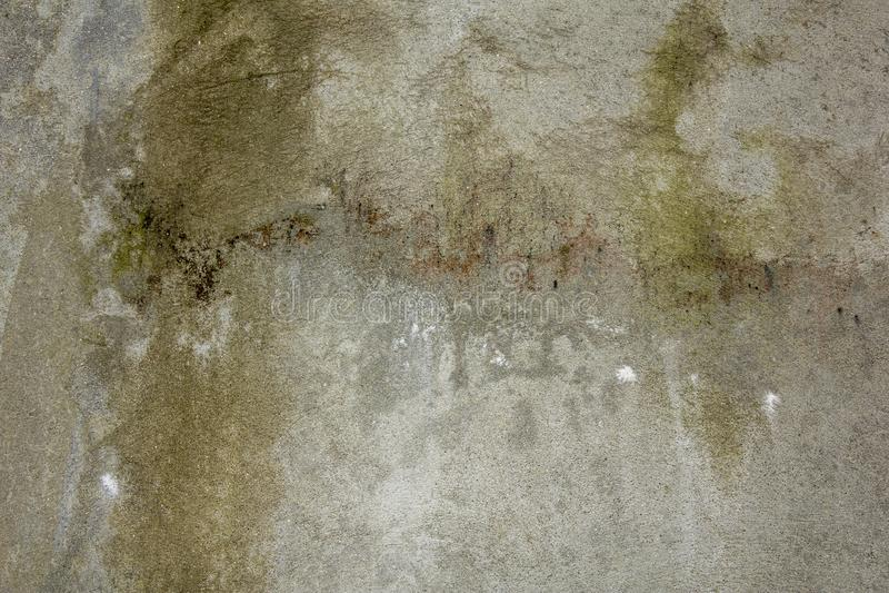 Un muro de cemento gris blanco con una superficie áspera Musgo verde rasguños en el muro de cemento fotografía de archivo libre de regalías