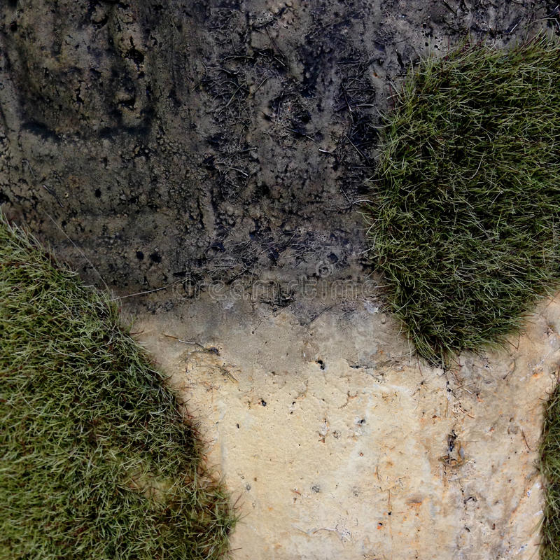 Un musgo en la piedra imagen de archivo libre de regalías